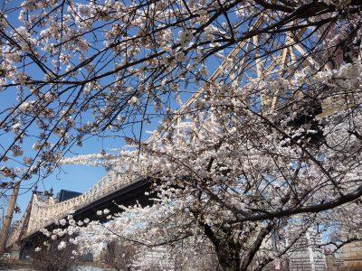New York, chicche: Roosevelt Island, Queensboro Bridge