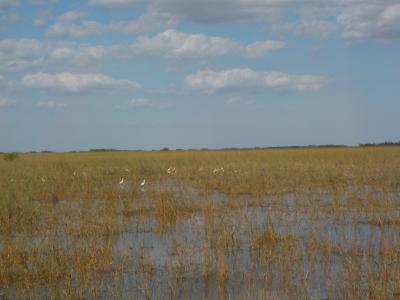 Florida a misura di bambino: Tamiami-Everglades-Shark Valley