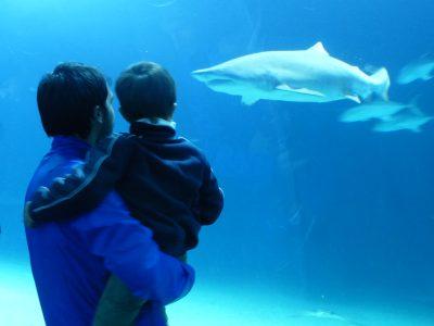 Valencia con i bambini: l'Oceanogràfic