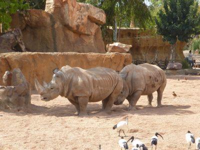 Valencia con i bambini: animali al Bioparc