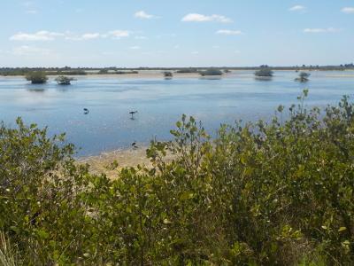 Florida a misura di bambino: Black Point Wildlife Drive
