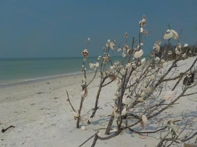 Florida a misura di bambino: Tigertail's Beach-Marco Island